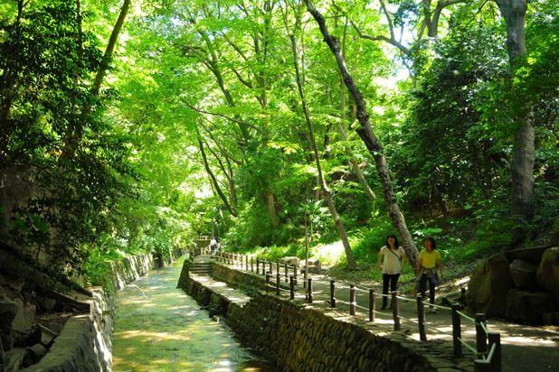 【渋谷から20分】水と緑豊かな等々力渓谷で癒しの休日デート - 東京デート / レッツエンジョイ東京