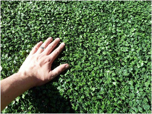 7 Benefits of Artificial Greenery via Home Decor Expert
