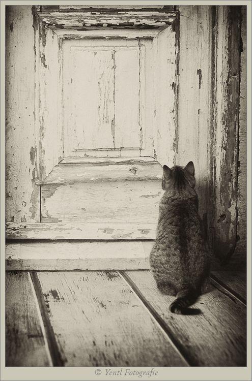Waiting. .. open the door please :-)                                                                                                                                                                                 Plus