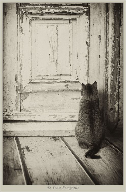Waiting. .. open the door please :-)