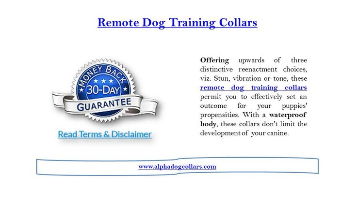 With over 85% of the customers terming these collars as satisfactory and extremely useful, you can be sure that you are buying a tried and trusted product. Offering as many as three different simulation options, viz. Shock, vibration or tone, these remote dog training collars allow you to easily set a consequence for your dogs' habits. Visit us for more updates at   https://www.alphadogcollars.com/