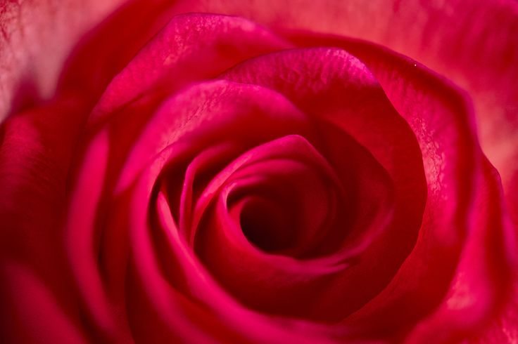 Red close by David Gonzalez on 500px