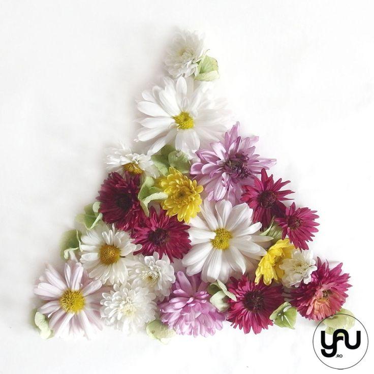 Crizanteme-colorate-GEOMETRIA-TOAMNEI