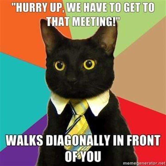 The Absolute Best of the Business Cat Meme | 🍀ViraLuck #memes