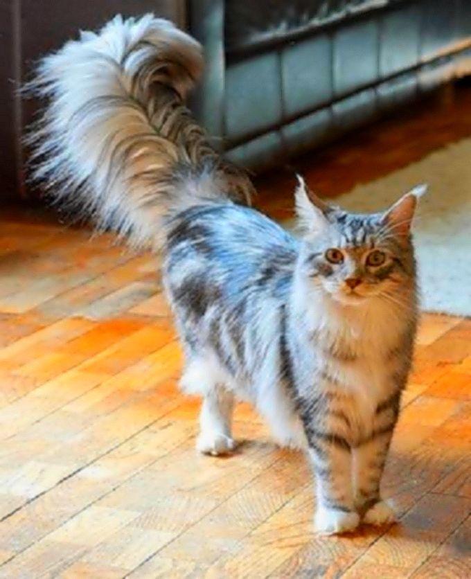 ما هذا الديل الجميل صور قطط حلوة زوروا مدونة عشاق القطط Cats Animals