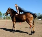 Kerry trying out her new vaulting horse...er...zorse