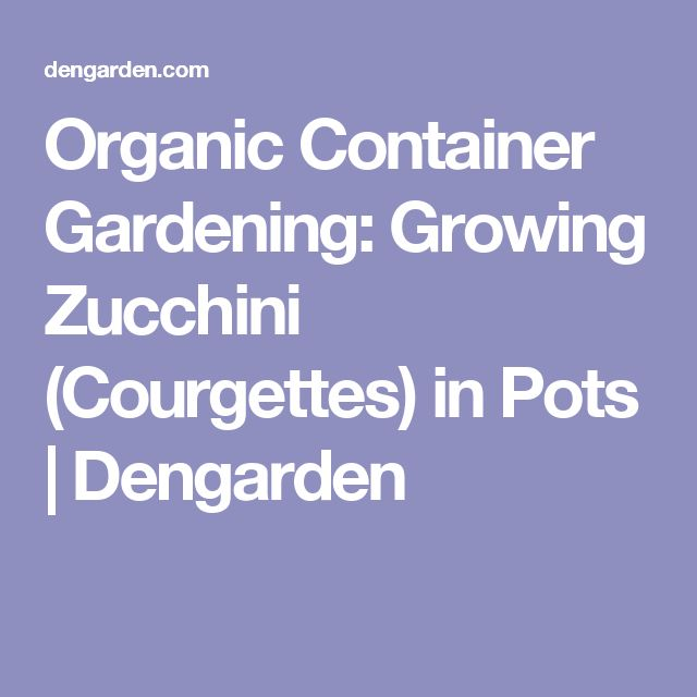 Organic Container Gardening: Growing Zucchini (Courgettes) in Pots | Dengarden