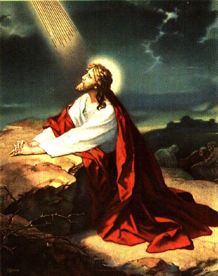 Garden Of Gethsemane Prayer Shawl | Gardening: Flower and