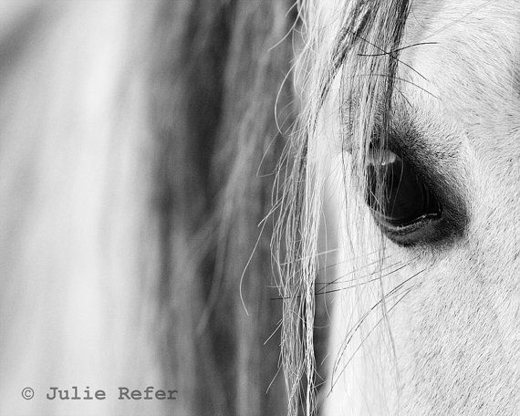 Horse photography black and white just ordered this in canvas size for over the fireplace