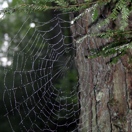 107 best arachnid lace images on pinterest spiders spider webs and hand spinning. Black Bedroom Furniture Sets. Home Design Ideas