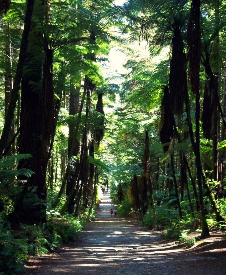 Punga Trees in Red Woods Walk New Zealand. By Christy-Lynn Breetvelt
