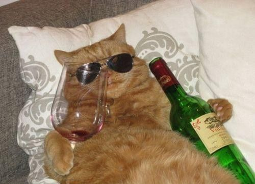 Stop Whatever You're Doing, There's A Wine For Cats Now