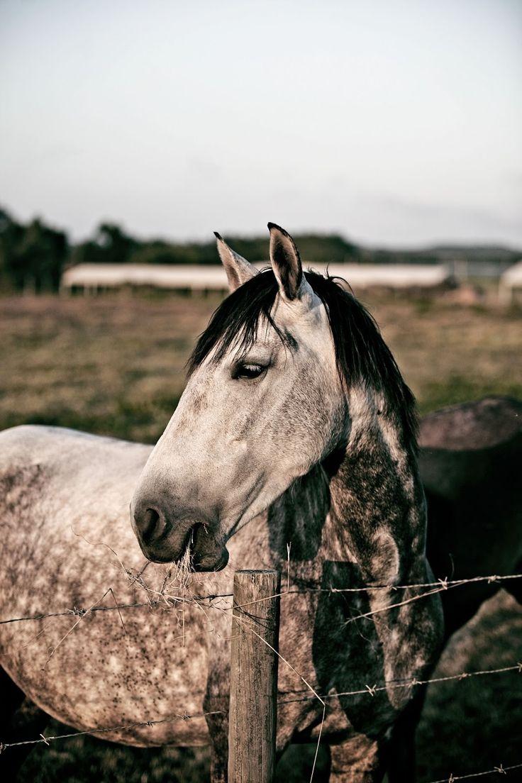 Lovely horse in Odeceixe - Pratos e Travessas | Mónica Pinto