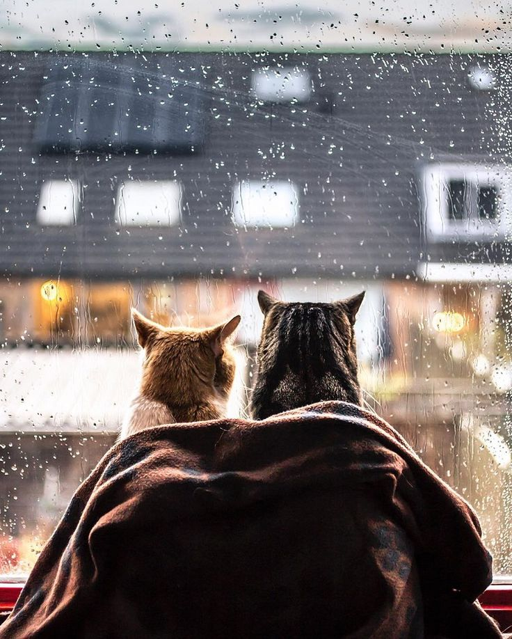 Photographer Captures Cozy Portraits of Her Cats by the Window Whenever It Rains - My Modern Met