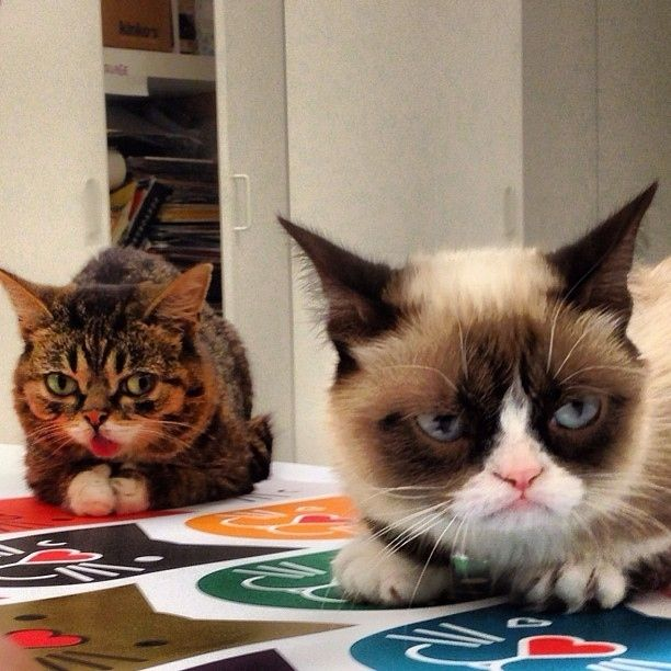 Bub and Grumpy Cat are friends IRL!