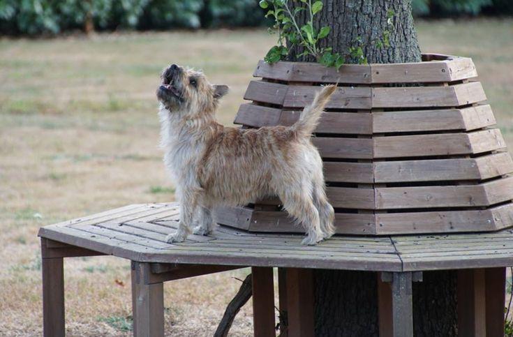 10++ Westbrook animal refuge league ideas