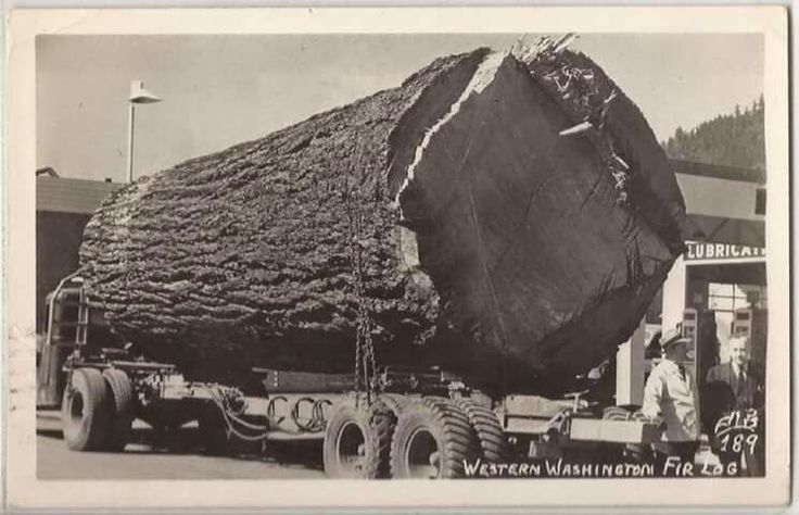Sawn Timbers Supply In Washington State ~ Best images about history of trucking on pinterest