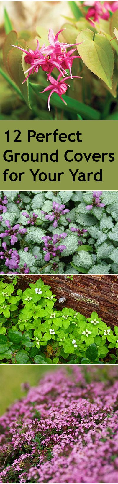 Ground cover plants, garden ground covers, popular pin, gardening, gardening hacks, ground cover shrubs, yard and landscape.