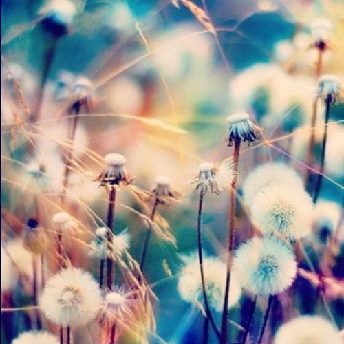 puff in göttingen dream heaven