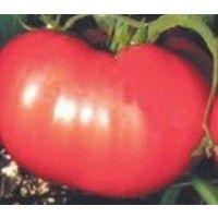 Semillas Ecologicas de Tomate Rosa de Berna 25 G