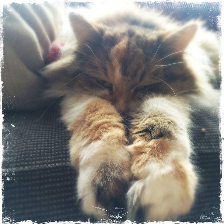 Persian cat allergy symptoms