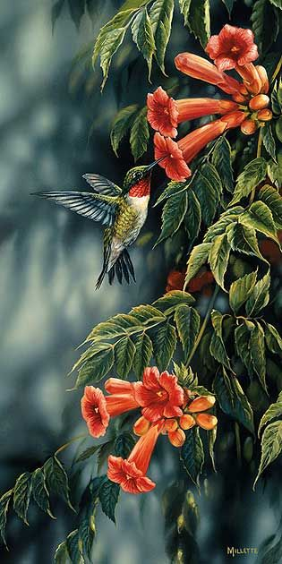 Summer; Ruby-throated Hummingbird by R. Millette