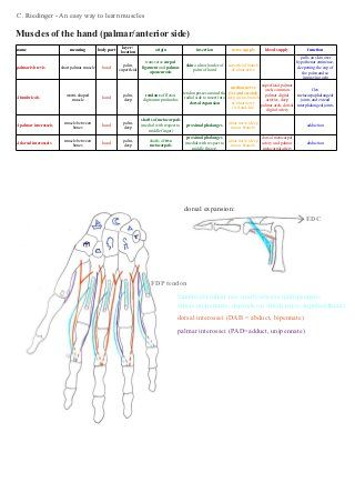 The Definitive Guide to Wrist Flexors Anatomy, Exercises ...