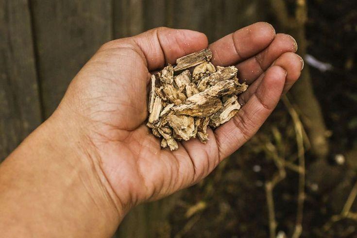 Pulberea din rădăcină de PĂPĂDIE face minuni în bolile de ficat şi cardiovasculare (cure cu efect rapid)