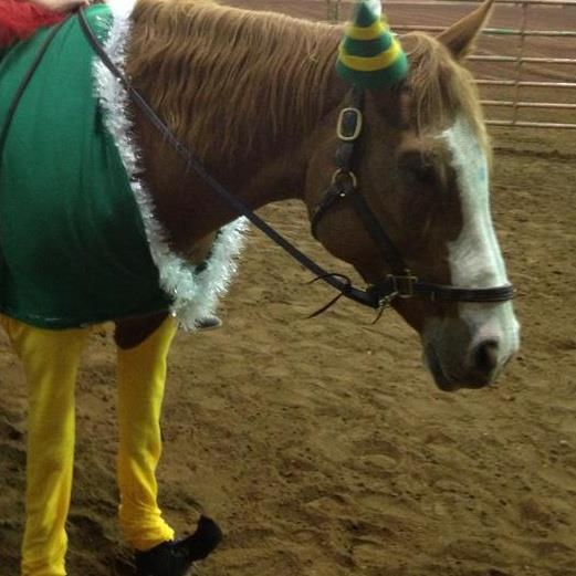 36 Best Images About Horse Costume Class On Pinterest