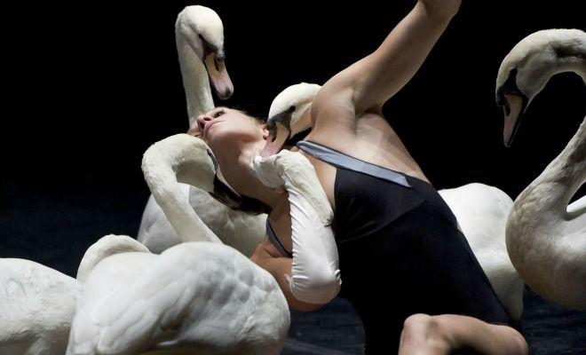 Du 7 au 16 septembre, Biarritz prend le temps d'aimer la danse et livre sur un plateau la crème des compagnies du moment