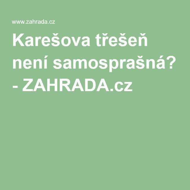 Karešova třešeň není samosprašná? - ZAHRADA.cz