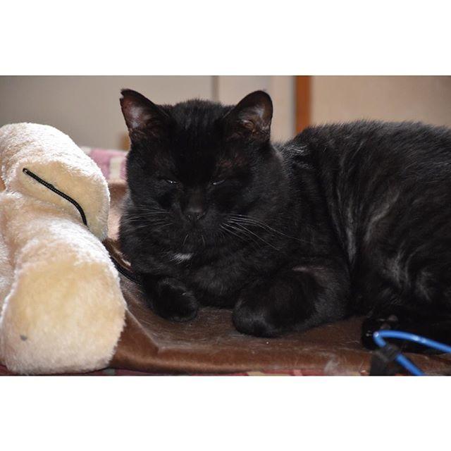 ひさしぶりに会ったネコは冬に向けて肥えてた😹 . . . . #nikond5500#ニコンd5500#ニコン女子#ニコン日和#カメラ女子#カメラ日和#カメラ好きな人と繋がりたい#写真好きな人と繋がりたい#地元#実家#久慈#kuji#愛猫#黒猫