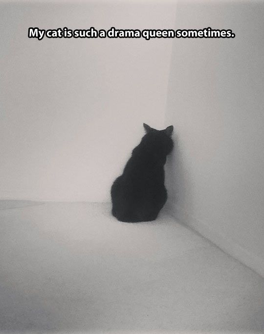 funny sad cat pictures - Google Search