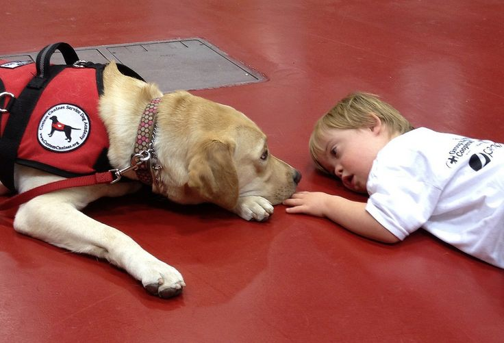 Autism Service Dog Program Provides Support for our Community | Blog | Autism Speaks