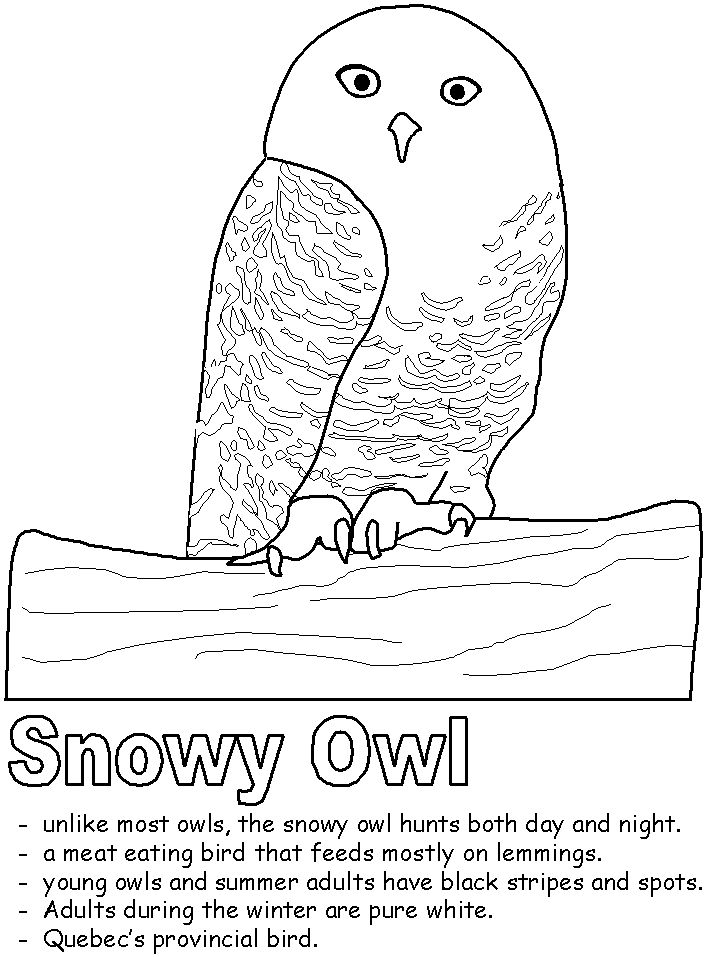 17 Best images about Snowy owls on Pinterest | Coloring ... - photo#38