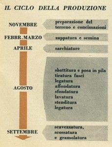 """Il ciclo della produzione della #canapa Dalla rivista a fascicoli per donne """"CANAPA"""", 1954 #tramedicanapa"""