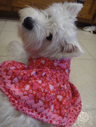 Happy #TerrierTuesday!  Check out our polishes at https://www.etsy.com/shop/TawdryTerrier. #tawdryterrier #westie #westhighlandwhiteterrier #puppy #valentinesday #dog