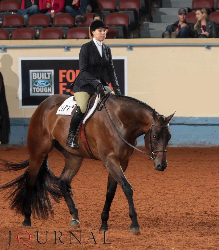 Junior Hunter Under Saddle | Not Just Anyhoo and AQHA Professional Horsewoman Beth Case, 2015 AQHA world champions