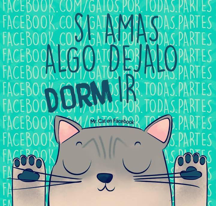Mr. Cat - Fotos
