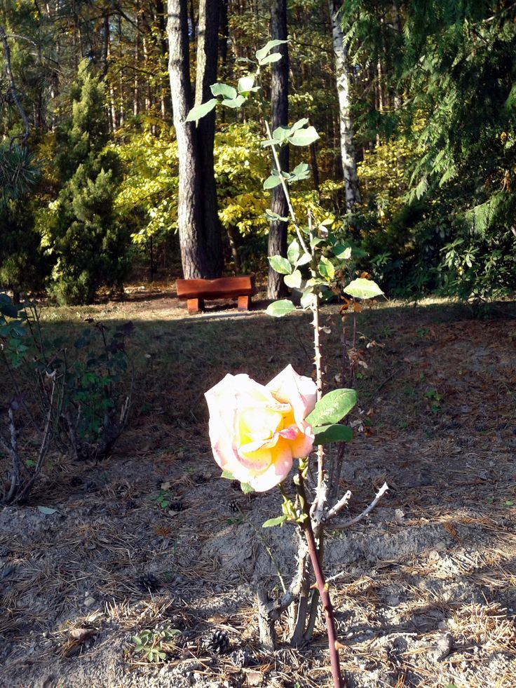 zahradní lavička ... celá reportáž zde: http://archivace.tumblr.com/post/152782851748/vyhotovování-zahradních-laviček