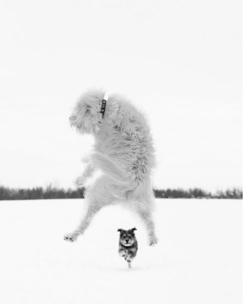 Special Gallery: Jumping Animals http://100mm.it/2013/11/05/special-gallery-jumping-animals/