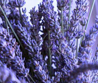 Harvesting Herbs: Gardens Ideas, Herbs Oil, Herbs Lavender, Fashion Ideas, Herbs Spices Oil, Wedding Bouquets, Harvest Herbs, Herbs Gardens, Gardens Herbs