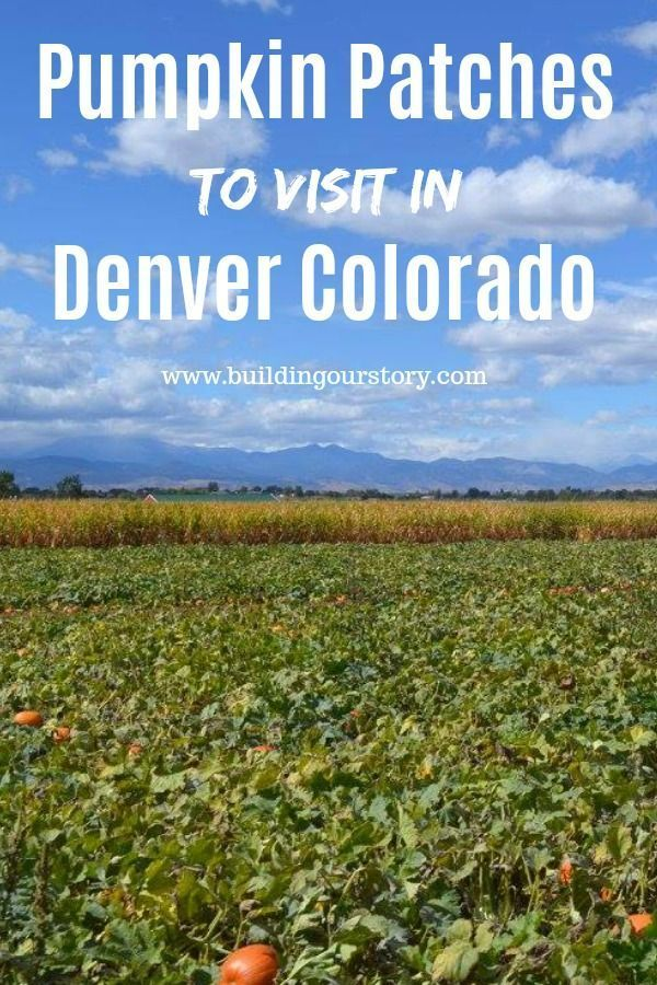 Pumpkin patches in Colorado, Pumpkin patches in Denver, great fall festivals in Denver, Fall festivals in Colorado, Fall festivals pumpkin picking