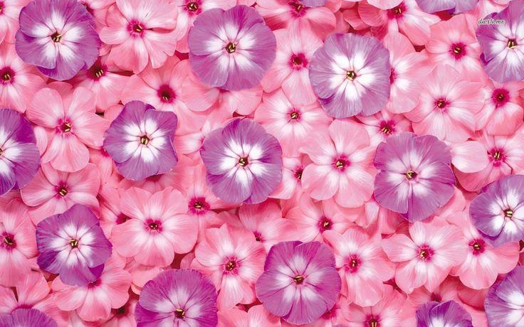 Pink And Purple Flowers Wallpaper Free Desktop 8 HD Wallpapers