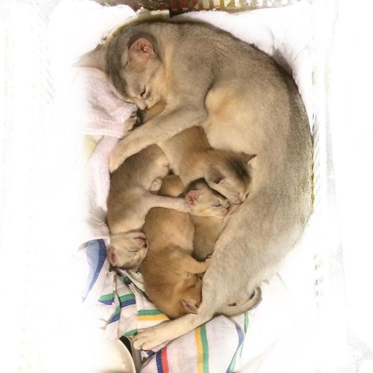 Arvaa montako olisin halunnut pistää vahingossa taskuun... #kittenlove #kissanpentu #newborn #flatlay