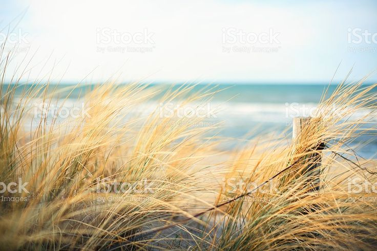 Day at the Ocean royalty-free stock photo