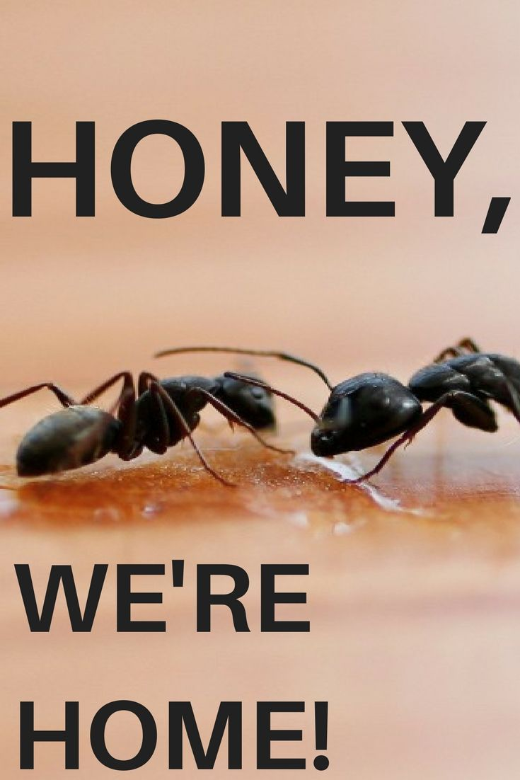 To Keep Ants Out Of The Kitchen, Store Sweet Staples Like Sugar, Syrup And  Honey In Plastic Containers That Snap Shut, And Wipe Them Down To Remove  Any ...