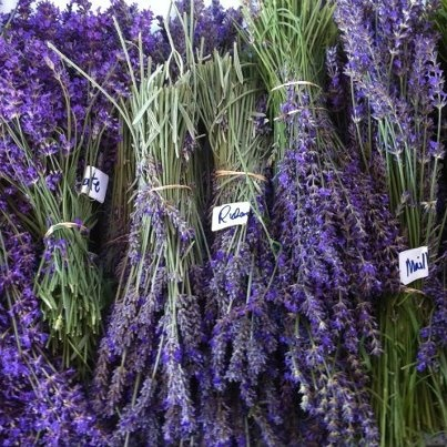 Different varieties of lavender Lavender Madness