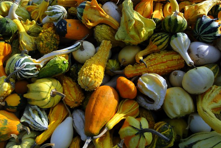 When decorative gourd season starts and ends, according to data