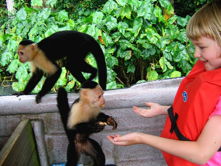 Kate feeding the white faced capuchin monkeys on Gatun Lake.